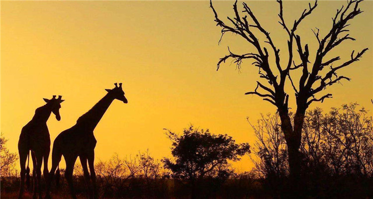 南非花园大道10日精品之旅
