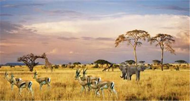 南非+克鲁格国家公园+花园大道12日游