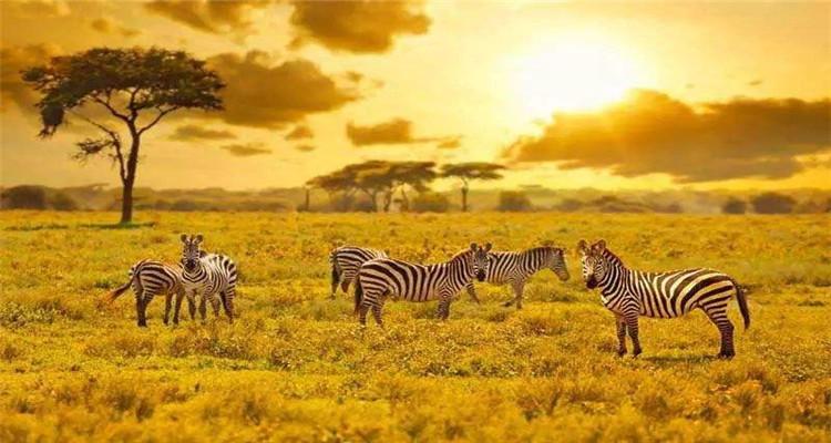 坦桑尼亚震撼动物大迁徙8日游(马尼亚拉湖+塔兰吉雷+塞伦盖蒂+恩戈罗恩戈罗)