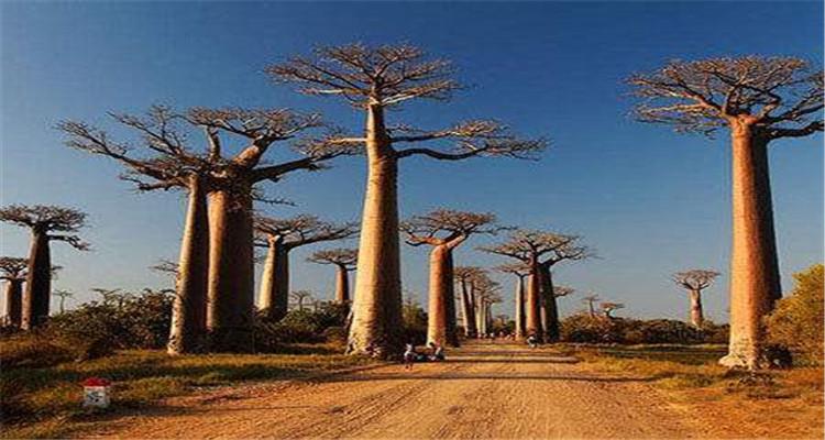 马达加斯加轻度探险10天7晚(成都起止,埃塞俄比亚航空)