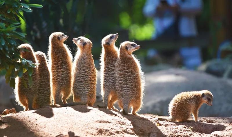 珠海长隆海洋王国+广州长隆野生动物世界+欢乐世界或水上乐园双飞4日游